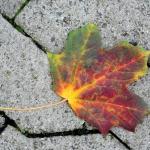 IMG_5d1_003068_autumn_2015