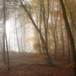 IMG_2252_autumn_2015_ii_5d2