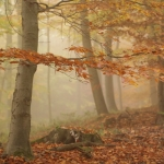 IMG_5d1_003370_autumn_2015_ii_5d1